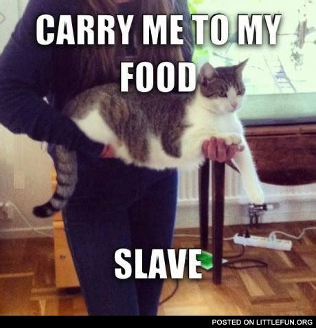 Bring Me Food Meme - littlefun carry me to my food slave