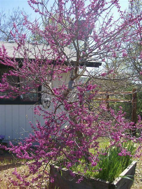 top 28 name of purple flowering tree purple flowering