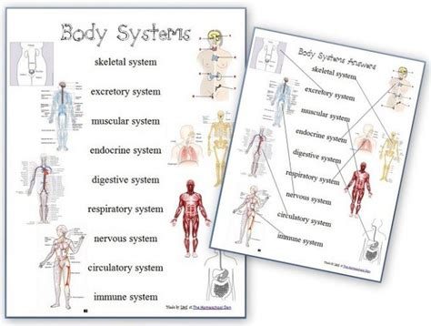 Systems Matching Worksheet by Free Human Systems Worksheets