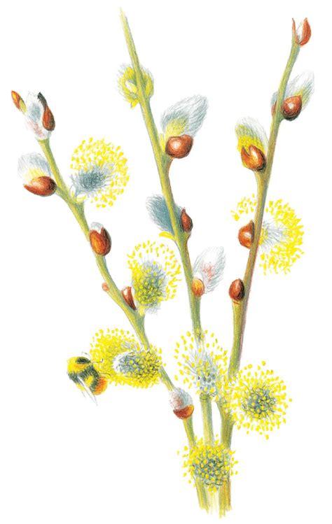classic sketchbook botanicals secrets amazon com classic sketchbook botanicals secrets of observational drawing 9781631591396