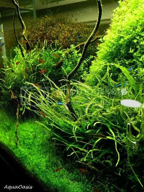 forest enchanted aquatic nature page