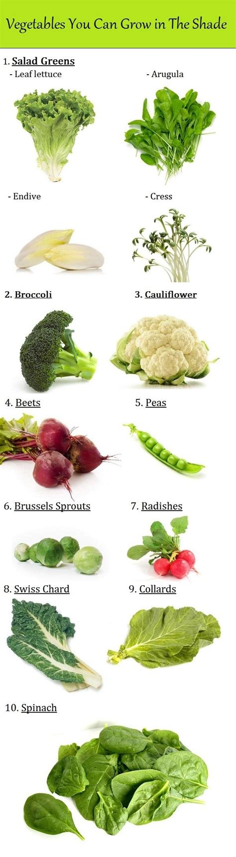 Vegetables You Can Grow In The Shade Raw Ayurveda How Much Sun Does A Vegetable Garden Need
