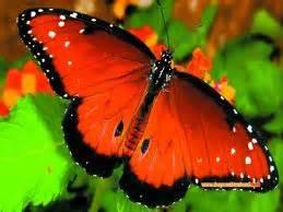 Khazanah Flora Dan Fauna Nusantara small think about butterfly kupu kupu keunikan tiada tara