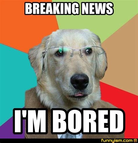 Bored Memes - pin bored funny meme on pinterest