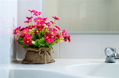 bathroom flowers uncategorized best bathroom plants englishsurvivalkit