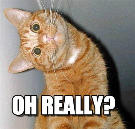 Cat Meme Maker - oh really cat tilting head meme on memegen