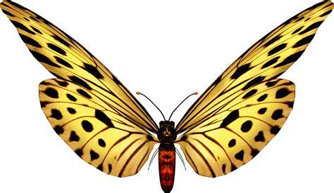 imagenes png wallpapers marcos gratis para fotos mariposas png