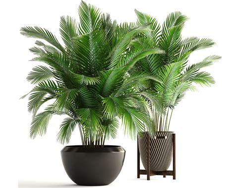 piante da tenere in casa dieci piante contro l inquinamento da tenere in casa anter