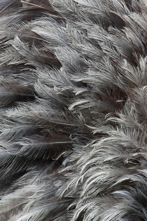 grey ostrich wallpaper серые перья texture feather download background photo