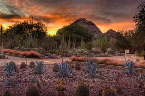 Arizona Desert Botanical Garden Best Places To A Sunset In The Sheet