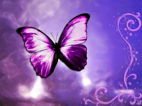 download fantastic butterfly screensaver animated download fantastic butterfly screensaver animated