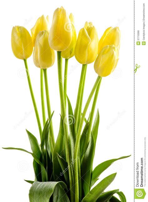 fiori a gambo lungo fiori gialli dei tulipani con il gambo lungo fotografie