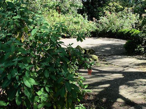 San Francisco Botanical Garden At Strybing Arboretum Fuchsias In The City Botanical Gardens