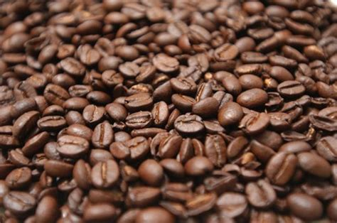 Coffee Bean Biji Kopi Robusta Aceh Gayo 1 Kg best aceh robusta coffee beans products indonesia best