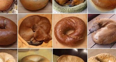 puppy or bagel out of those images which ones are bagels and which ones are puppies