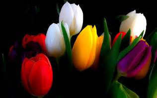 Vase Full Of Roses Tulip Flowers Hd Wallpapers Free Download