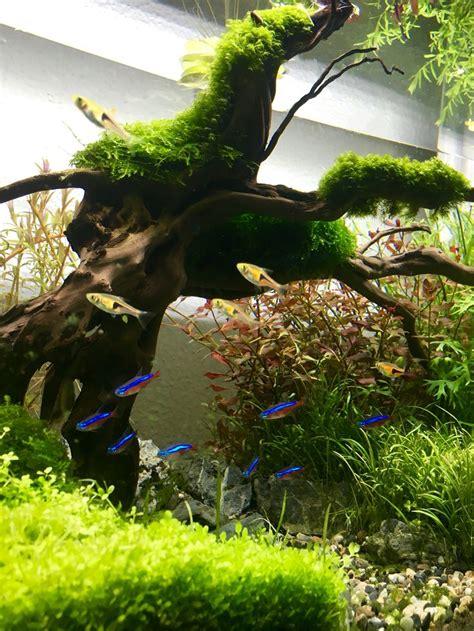 fish tank aquascape designs best 25 aquarium aquascape ideas on pinterest aquarium