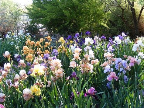 Desert Botanical Garden Membership Tucson Botanical Gardens Membership Garden Ftempo