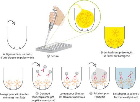 L Assay by Uclouvain Fdp Virologie