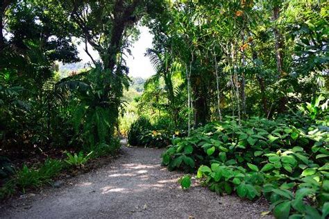 Cairns Botanical Garden Palm Trees Picture Of Cairns Botanical Gardens Cairns Region Tripadvisor