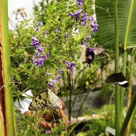 casa delle farfalle la casa delle farfalle la serra tropicale a roma