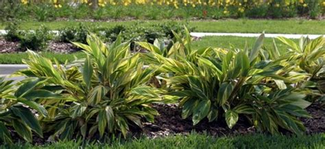 Landscape Lighting Gainesville Fl Tips To Create Tropical Gainesville Landscaping The