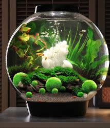 moss balls  great  aquariums animals small  big