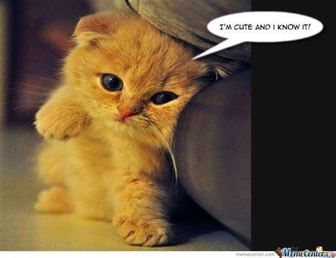 Cute Kitten Meme - cute cat by melissa schillewaert meme center