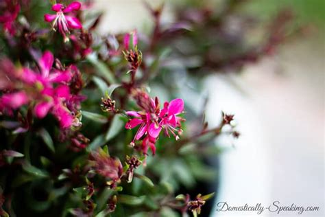 patio definition define your patio with monrovia plants domestically speaking
