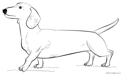 Dachshund Coloring Pages how to draw a dachshund step by step drawing tutorials