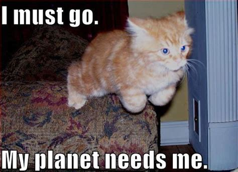 Flying Cat Meme - a brief history of lolcats warning from chairman meow