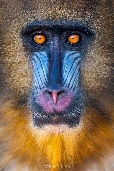 selfie toth csaba weird animals animals wild animals beautiful