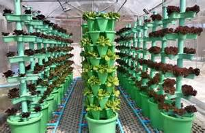 Strawberry Vertical Garden - thailand vertical growing system triples harvest compared to horizontal nft system