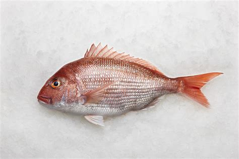 is that a fish fresh wild snapper whole fish approx 1kg mm fresh food