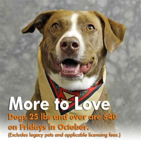 ky humane society adoptable dogs 40 fridays for dogs in october
