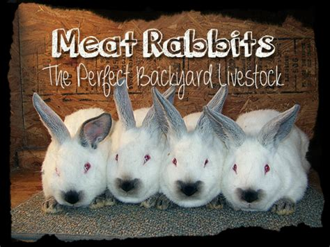 backyard meat rabbits the perfect backyard livestock hostile hare
