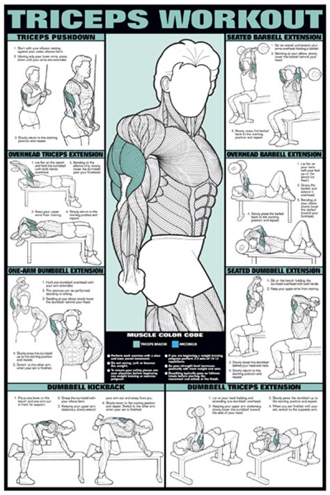 weight bench workout chart posters for workout training tricep item chart series