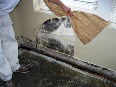 black mold in house hidden killer in your home hussar group