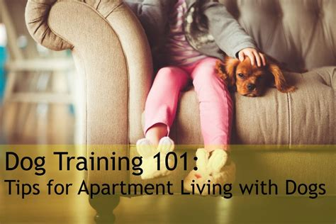 dogs for apartment living 101 tips for apartment living with dogs mclife houston