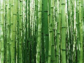 buy wallpapers bamboo wallpaper
