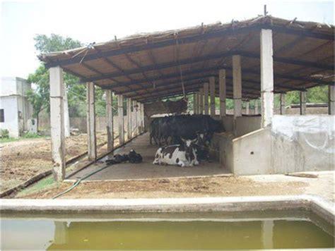 pak dairy info sairy shed designs