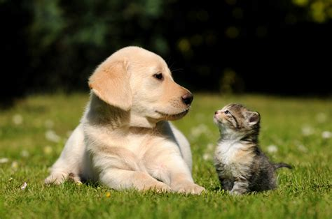 pictures of cats and dogs things you should when your and cat live together wishforpets