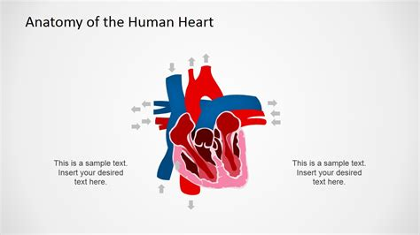 cardiovascular powerpoint template free anatomy of the human powerpoint shapes slidemodel