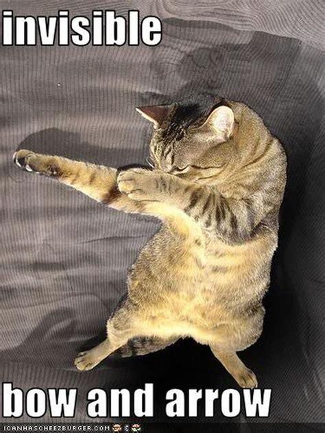 Invisible Cat Memes - invisible cheeseburger