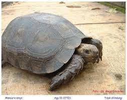Buku Seri Mengenal Hewan Kura Kura jendela hewan perlukah kura kura darat minum