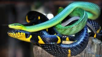 snake colors snake scales color 1600x900 11156 hd wallpaper res