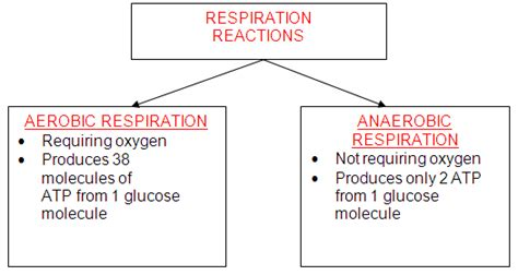 cellular respiration lab bench the biology place lab bench activity cellular respiration