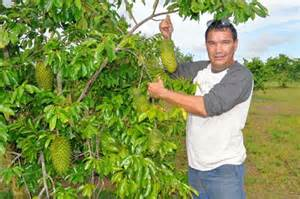guyana fruit trees serving up a healthy dose of soursop to expats caribbean