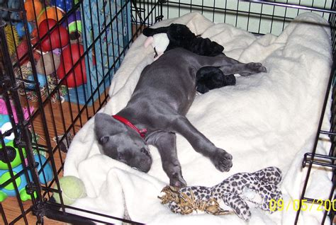 how to your to sleep in a kennel puppy basics new starter guide king west vets