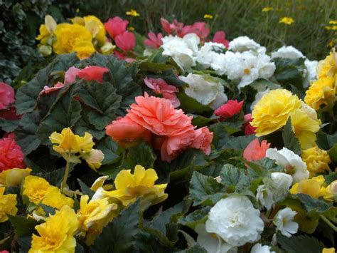 Garden Flowers Annuals The Easiest Annuals To Plant For Color All Summer Diy